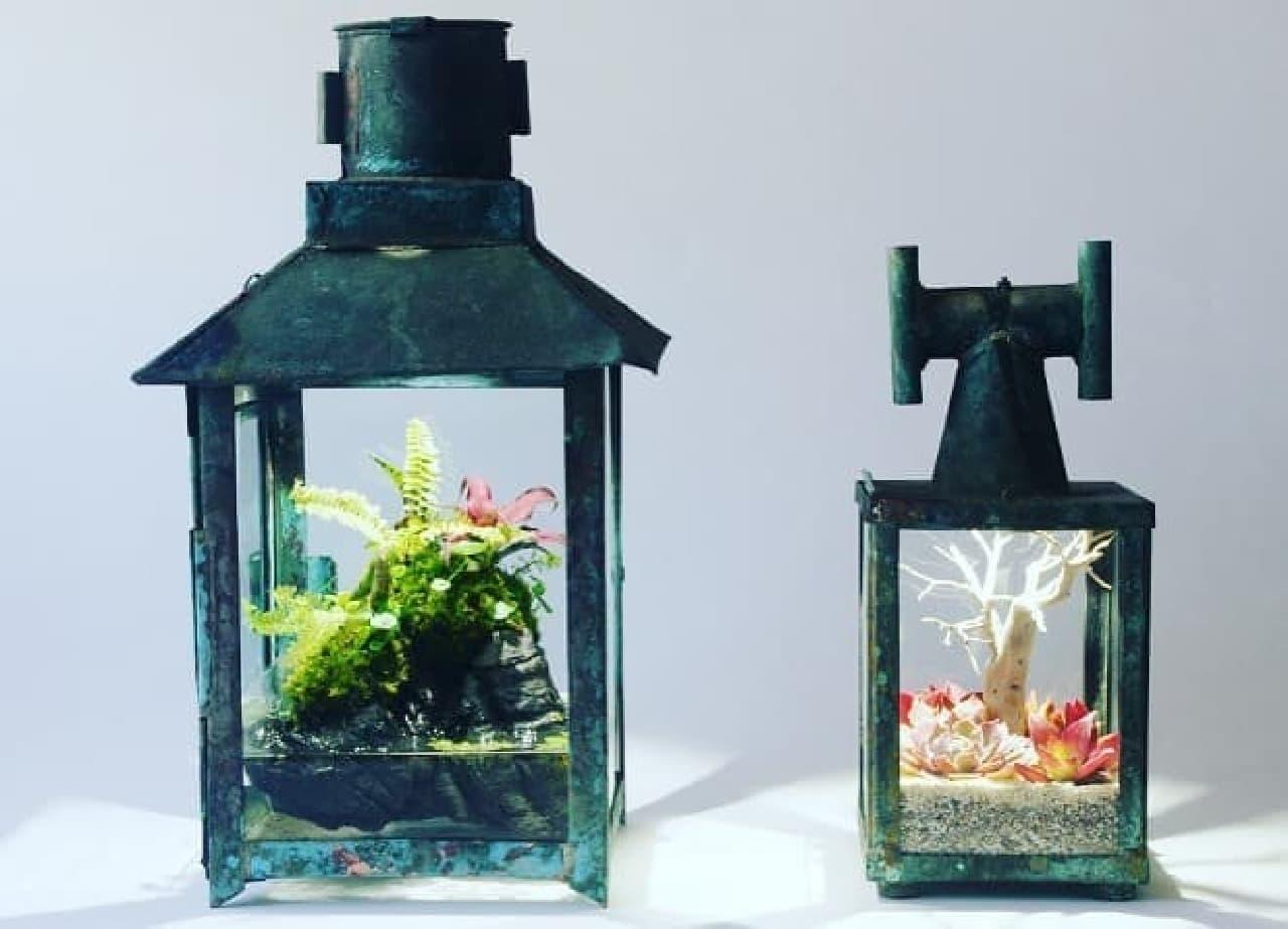 上海のランプ水槽のイメージ