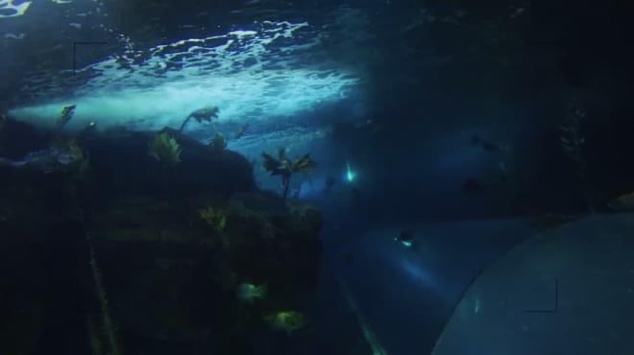ドローン視点の水中写真