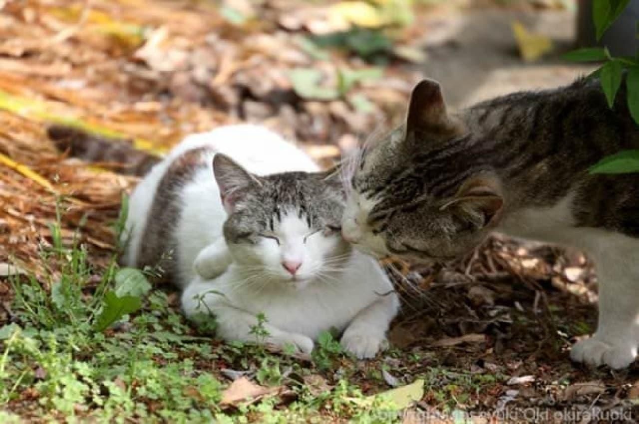 「ネコザイル」の沖昌之さんの写真が、「おはにゃん」に2回目の登場!