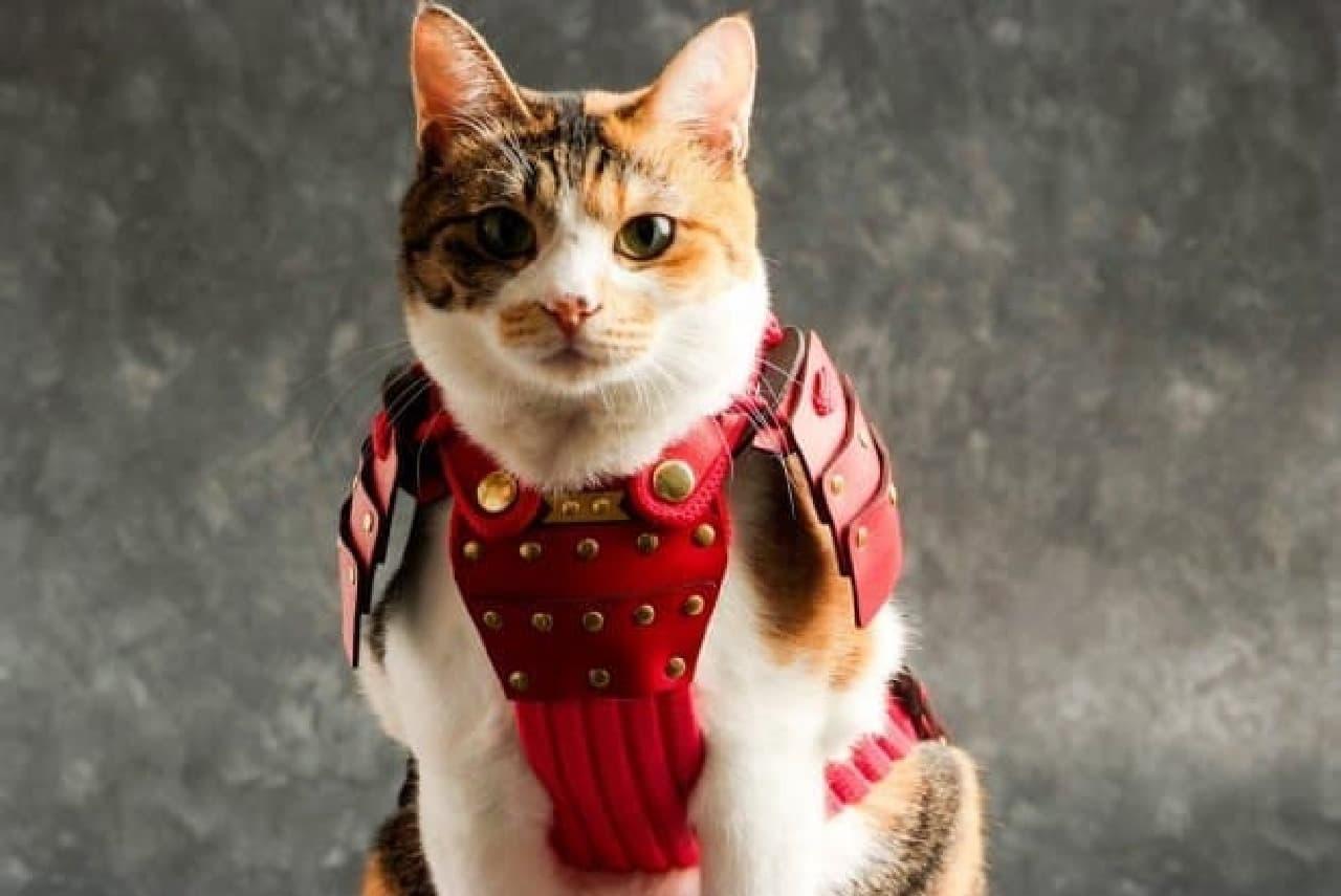 ネコ、小型犬用の鎧「ペット鎧」