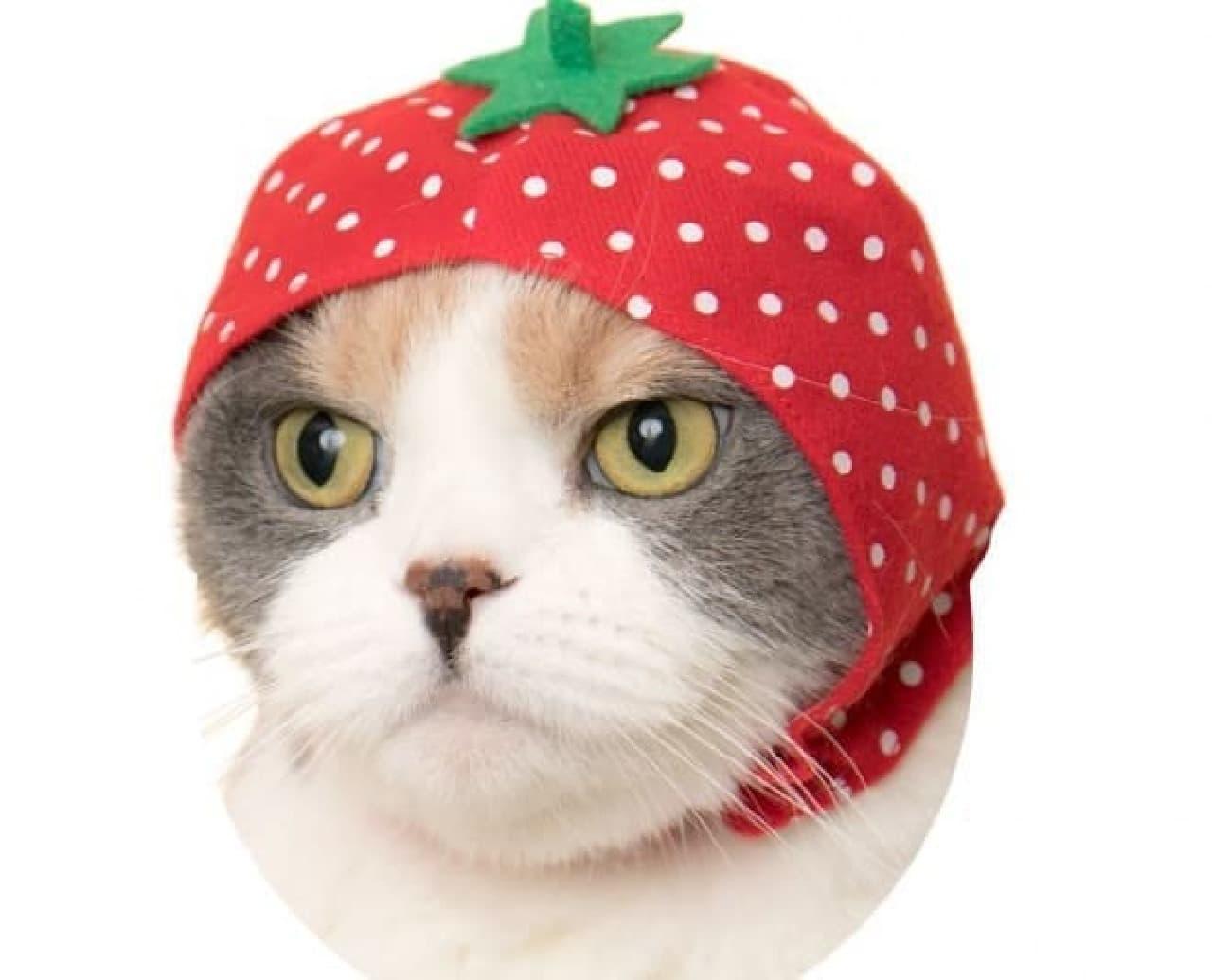 ネコ専用カプセルトイ第8弾「かわいい かわいい ねこのフルーツちゃん」