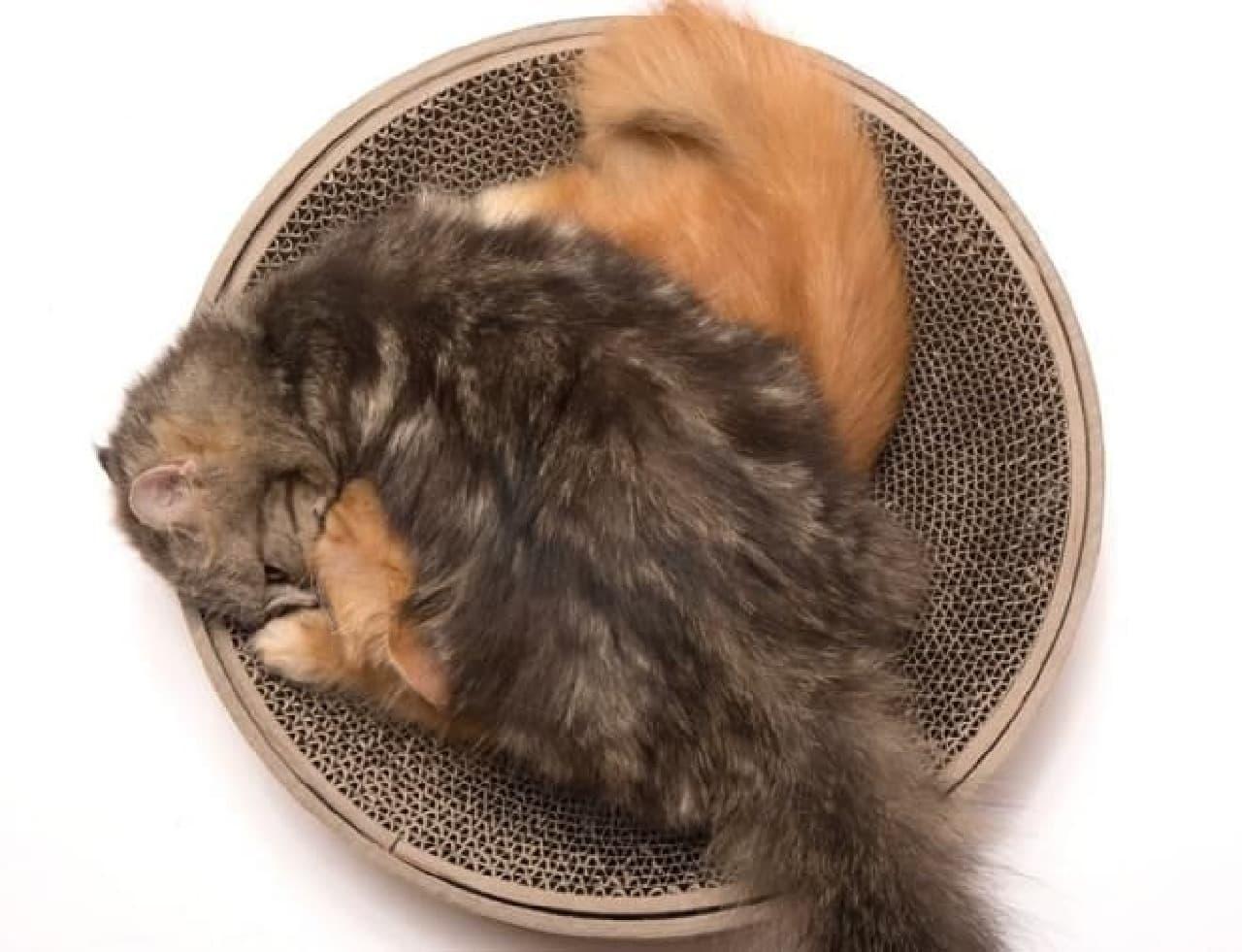 「バリバリボウル」に、キュートなネコ柄バージョン