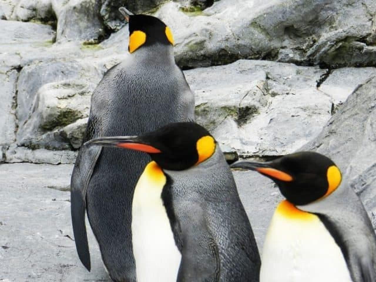 ペンギンのイメージ