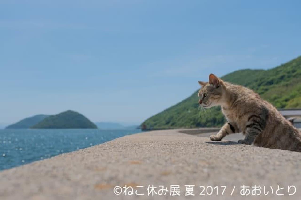 夏の本祭「ねこ休み展 夏 2017」開催!