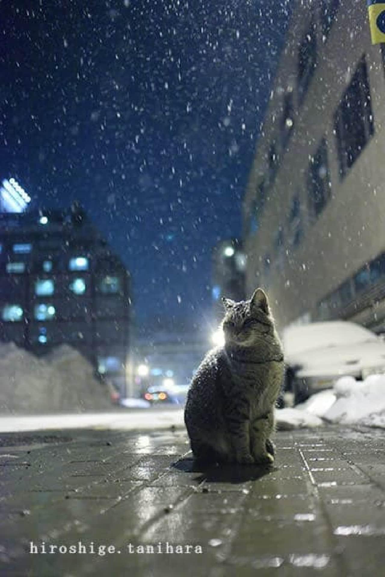 ネコ写真家 五十嵐健太さん主催の合同写真展「ねこ専」、今年は渋谷で開催!