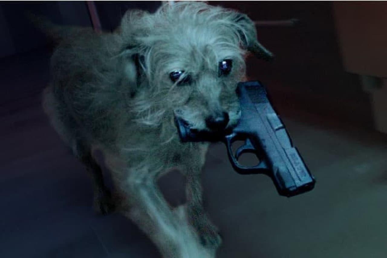 ドッグ・ウィックの犬画像