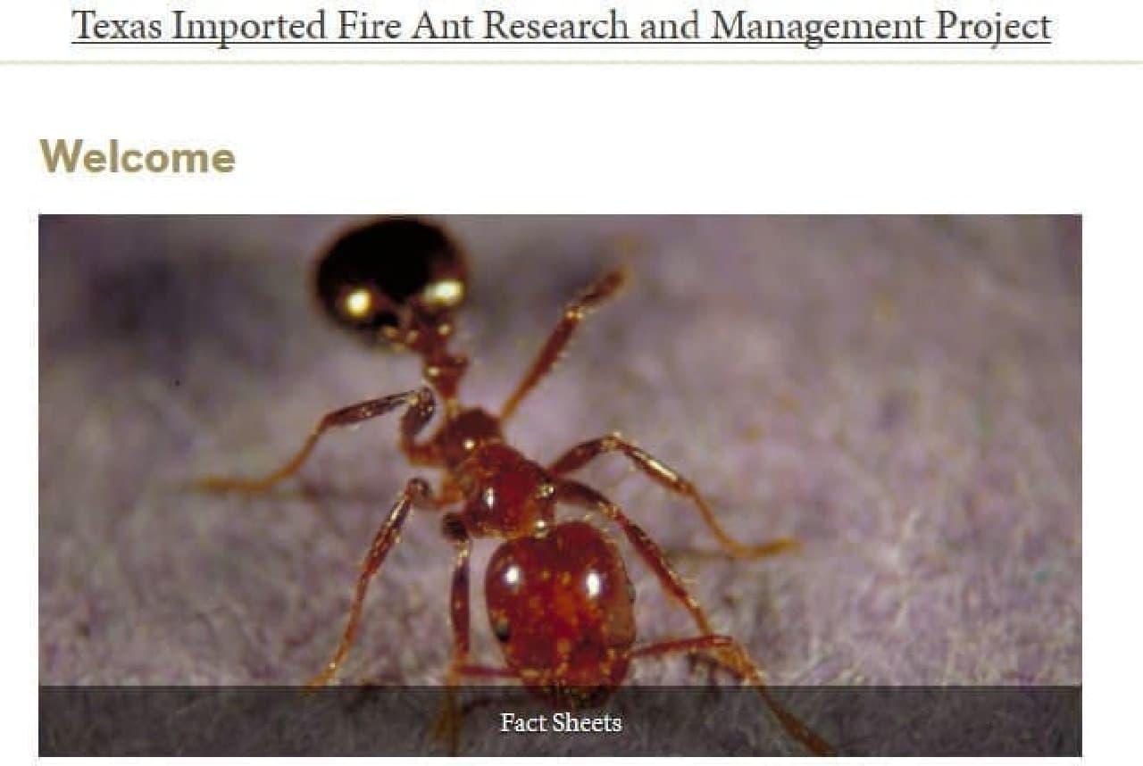 テキサス移入ヒアリ研究管理計画のトップページ