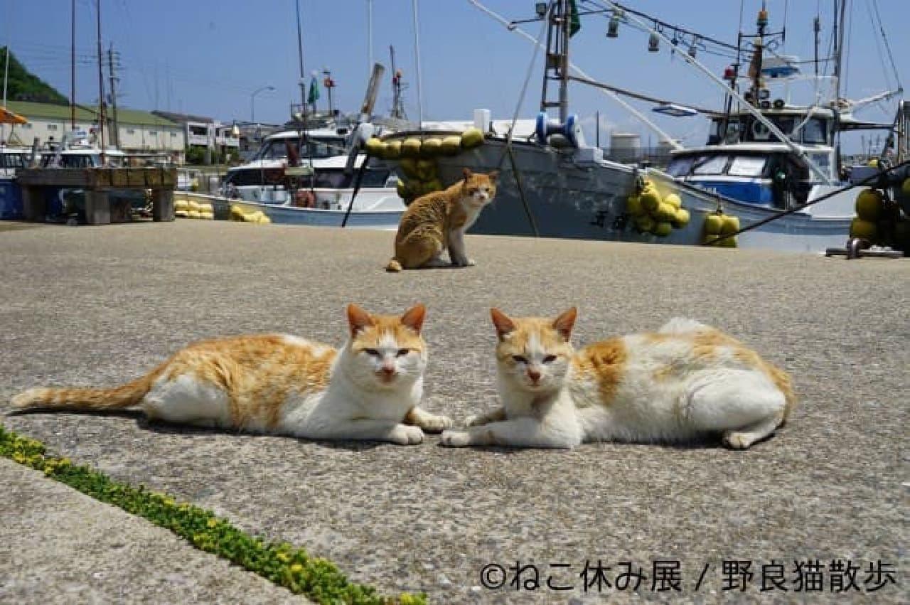 「ねこ休み展」」が香港に進出!