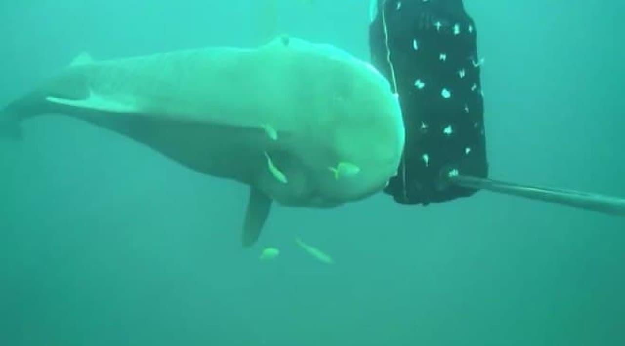 海の中で耳なし芳一…サメに見えないウェットスーツ