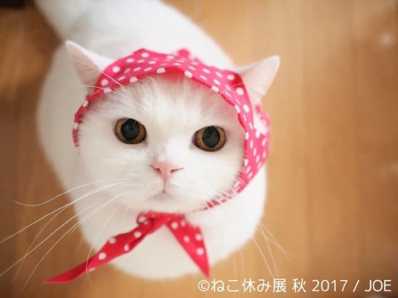 「ねこ休み展 秋 2017」が9月29日から名古屋で開催