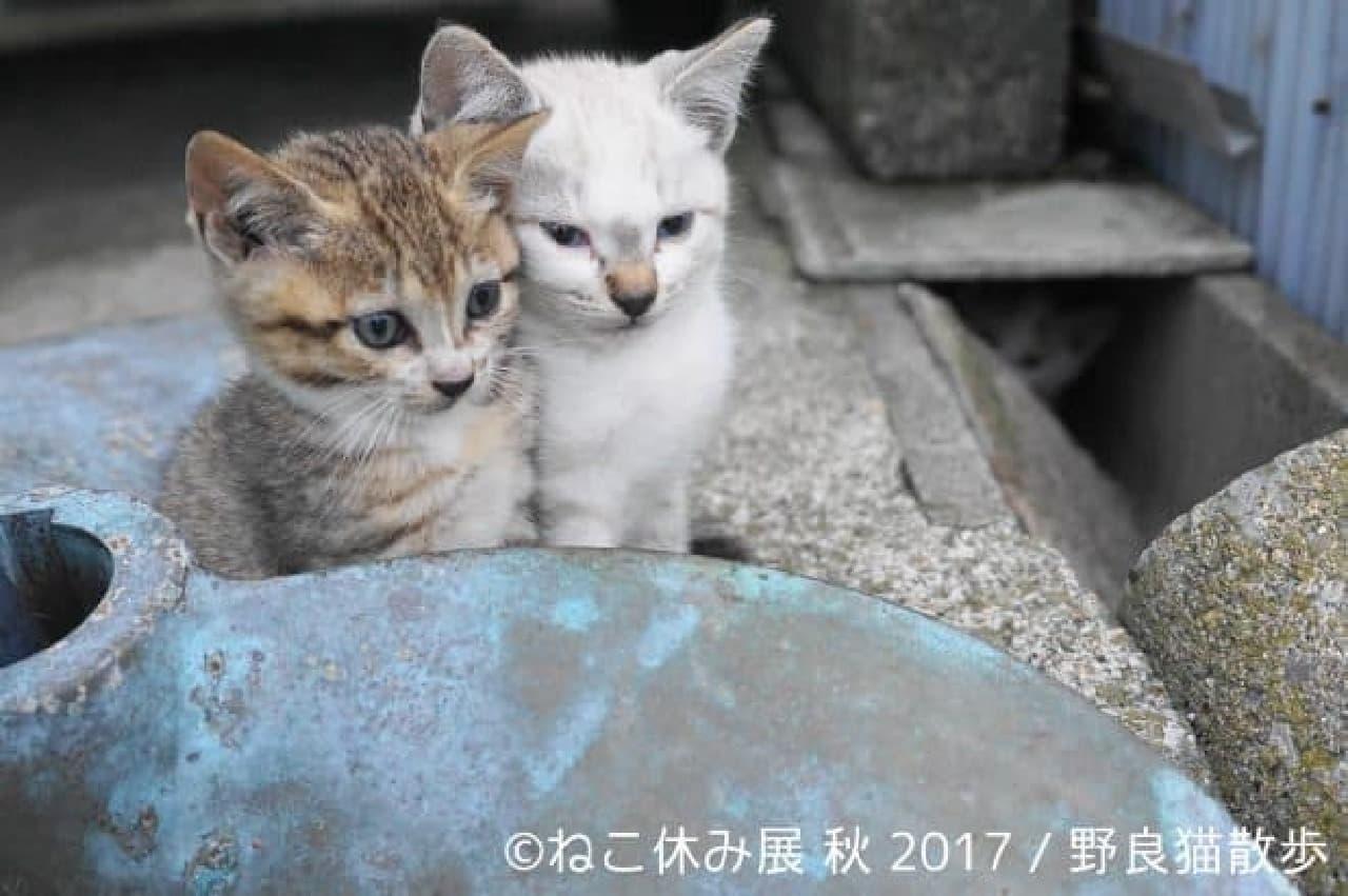 """「ねこ休み展 秋 2017」""""招き猫の日""""9月29日スタート"""