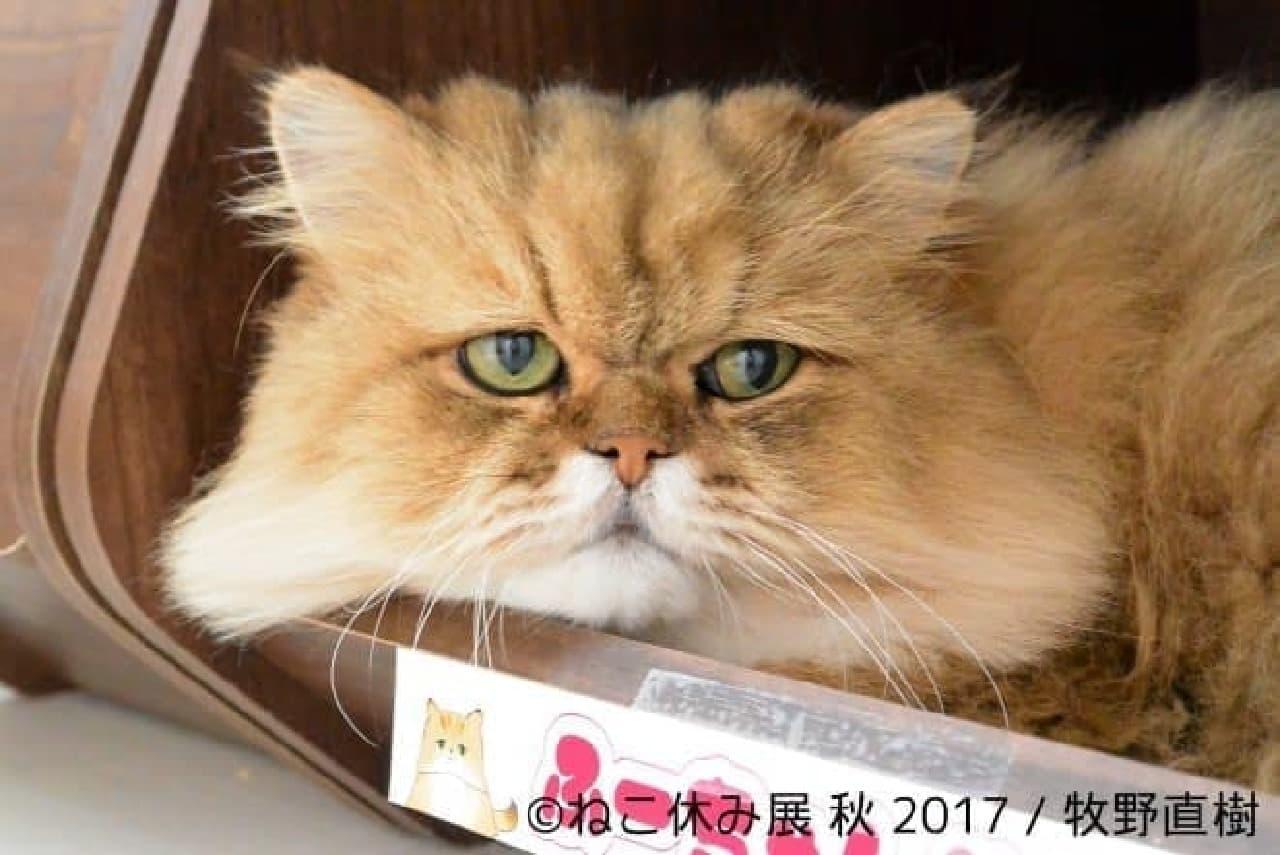 牧野直樹さん 保護した猫「ふーちゃん」