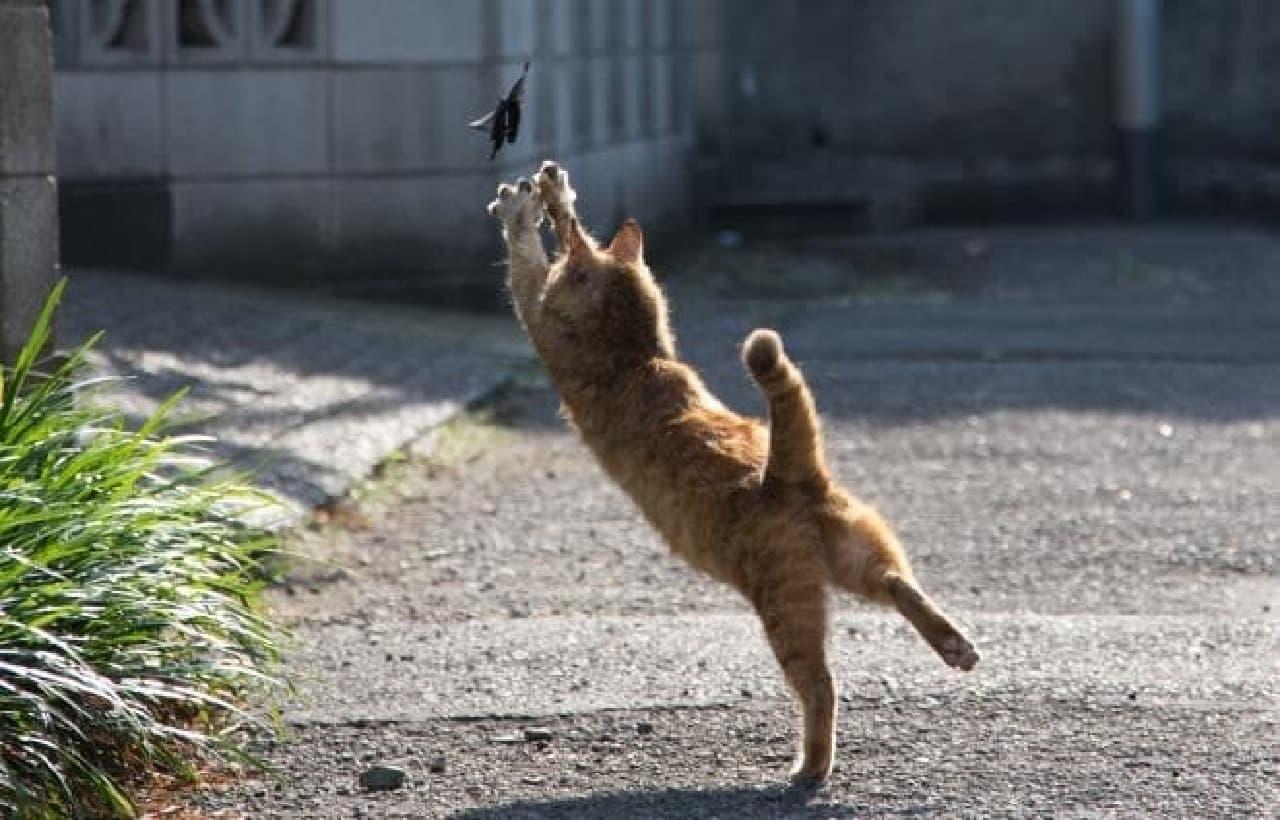 「必死すぎるネコ」って、どんなネコ?-沖昌之さんの最新写真集