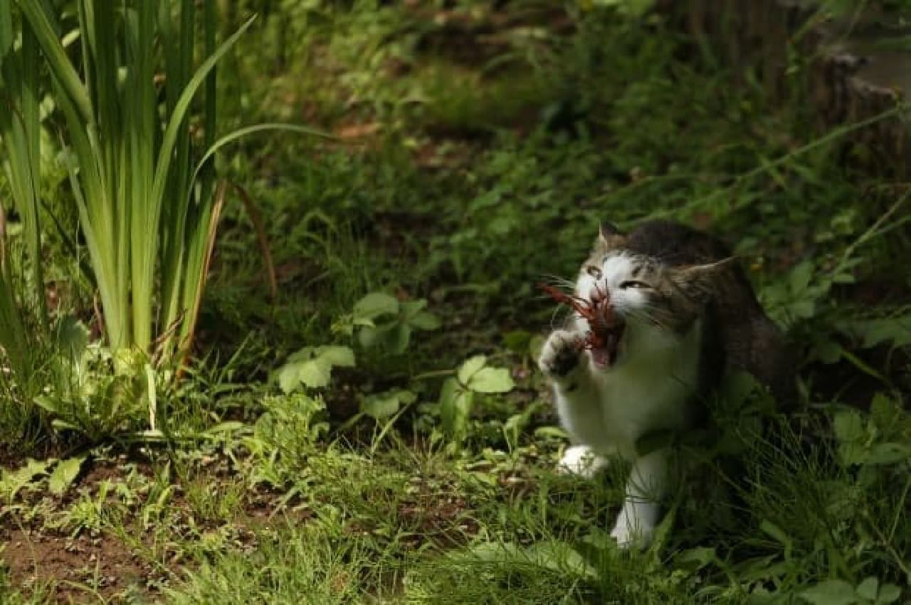 沖昌之さんの最新写真集「必死すぎるネコ」