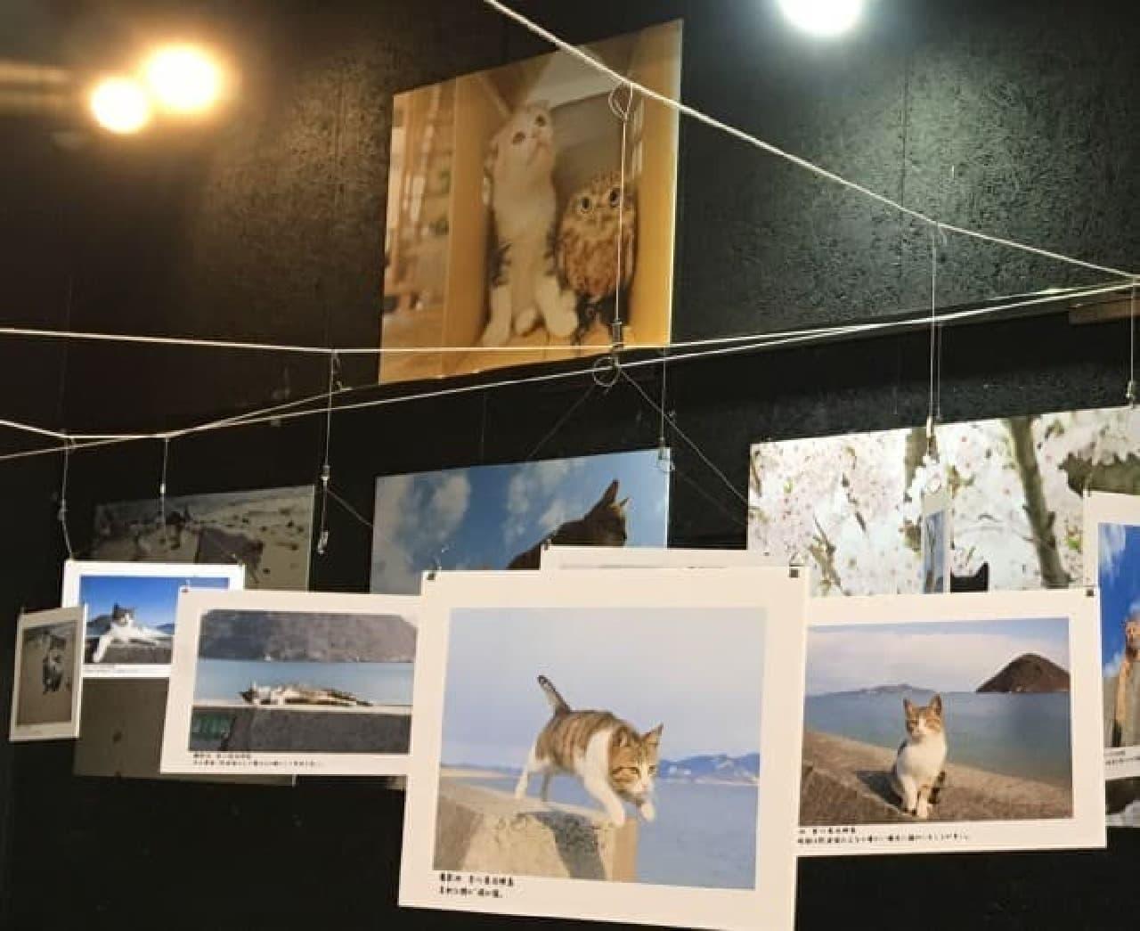 五十嵐健太のもふもふ猫写真展