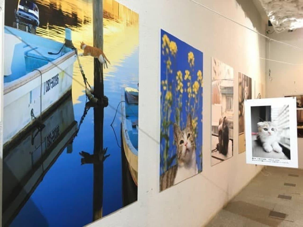 「五十嵐健太のもふもふ猫写真展」、えさし藤原の郷 天空館で
