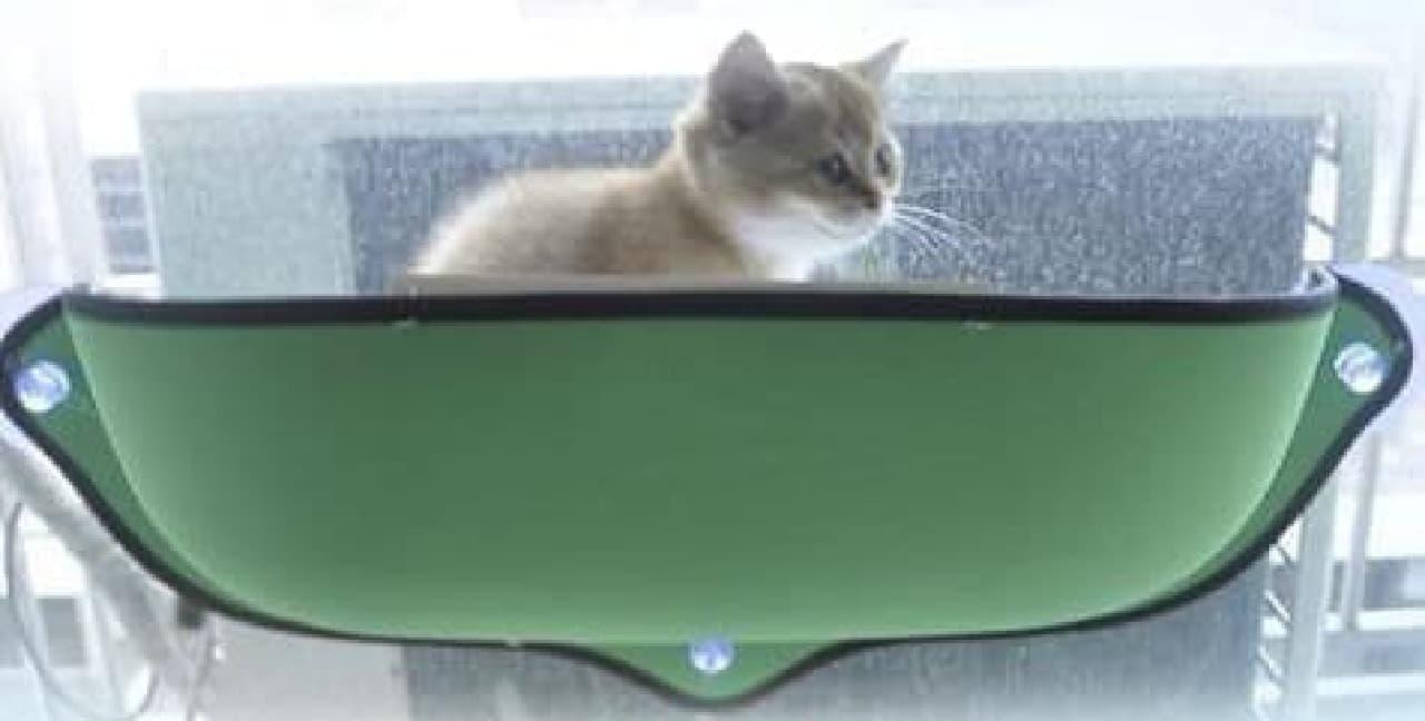 窓ガラスに吸盤で取り付けるキャットベッド「Kittypod」