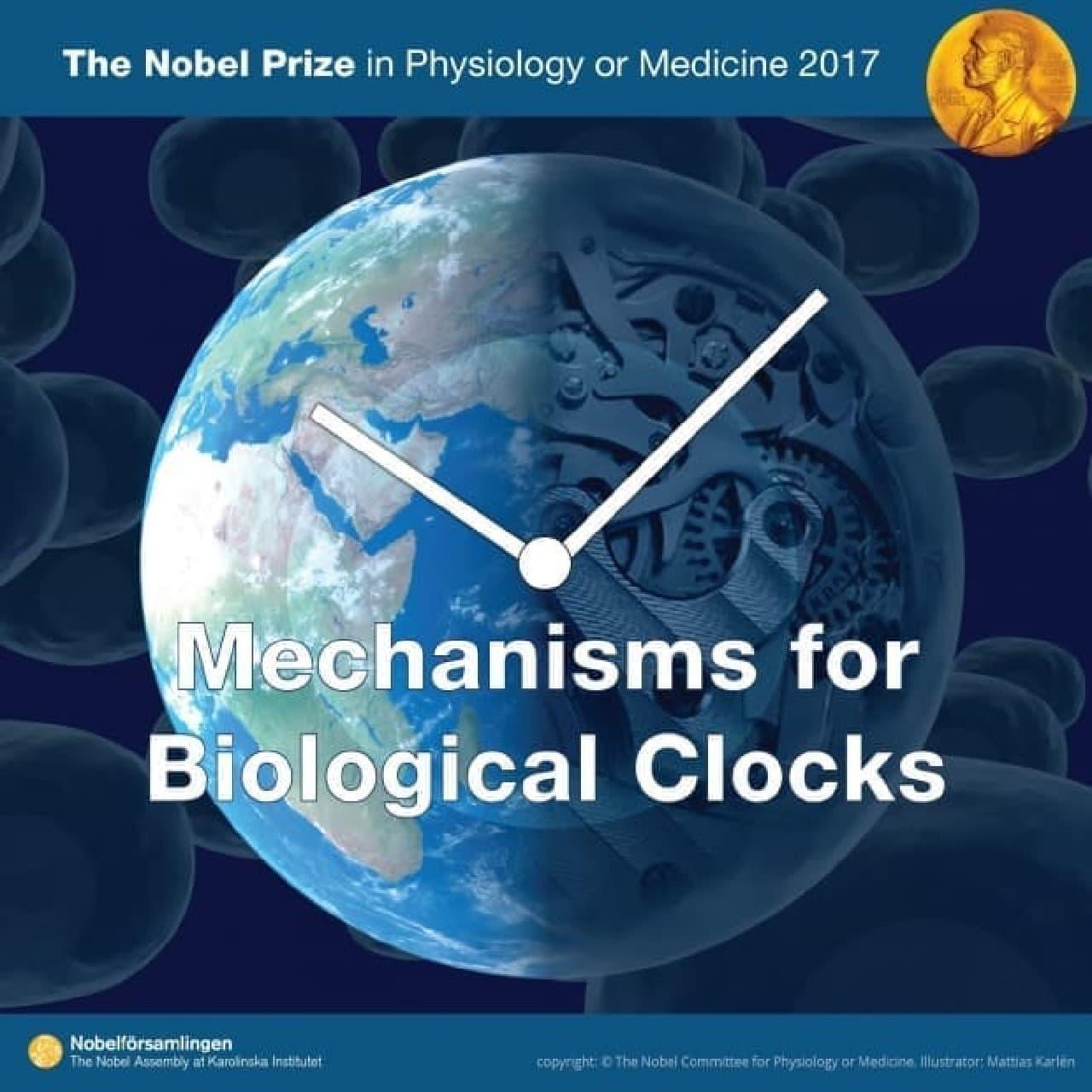 生物時計のイメージ