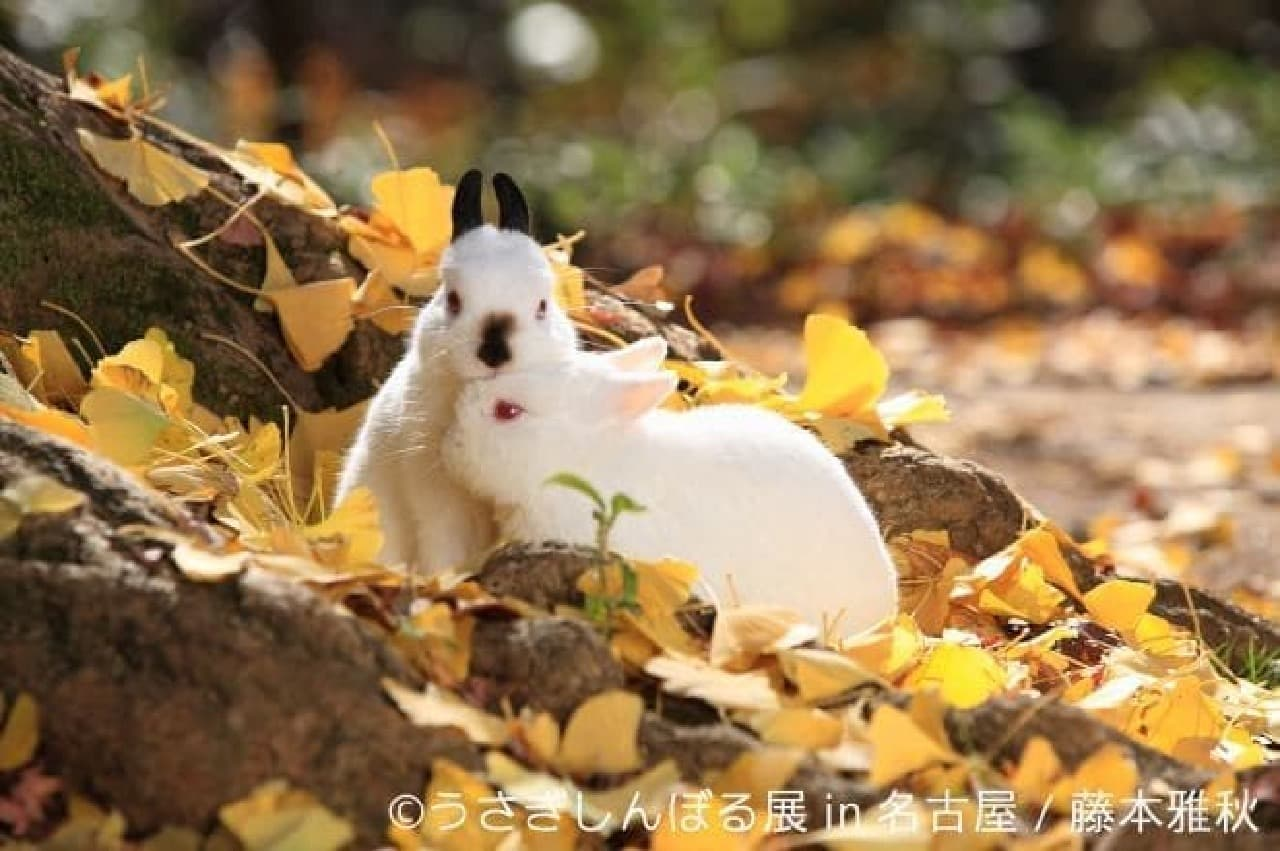 藤本雅秋さんによるウサギ作品
