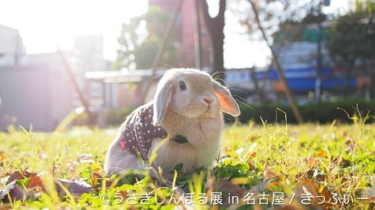 きっふぃーさんによるウサギ作品