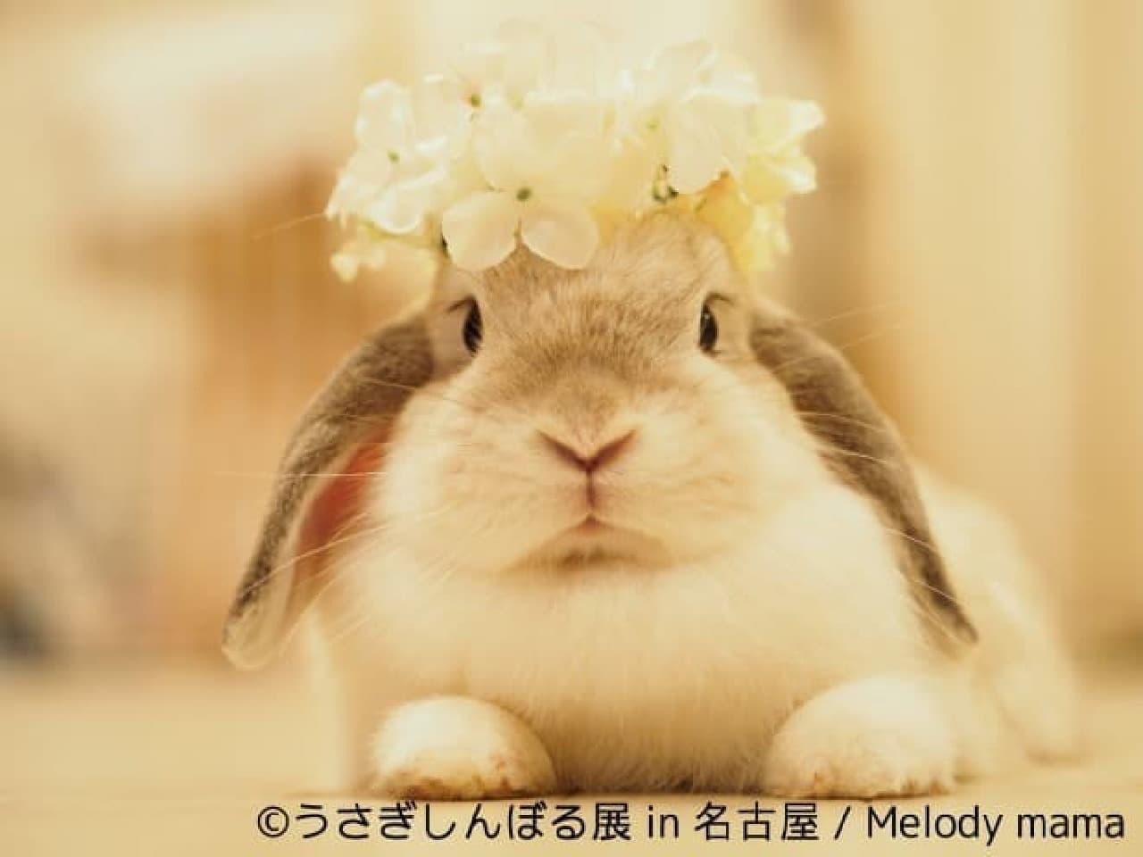 Melody mamaさんによるウサギ作品