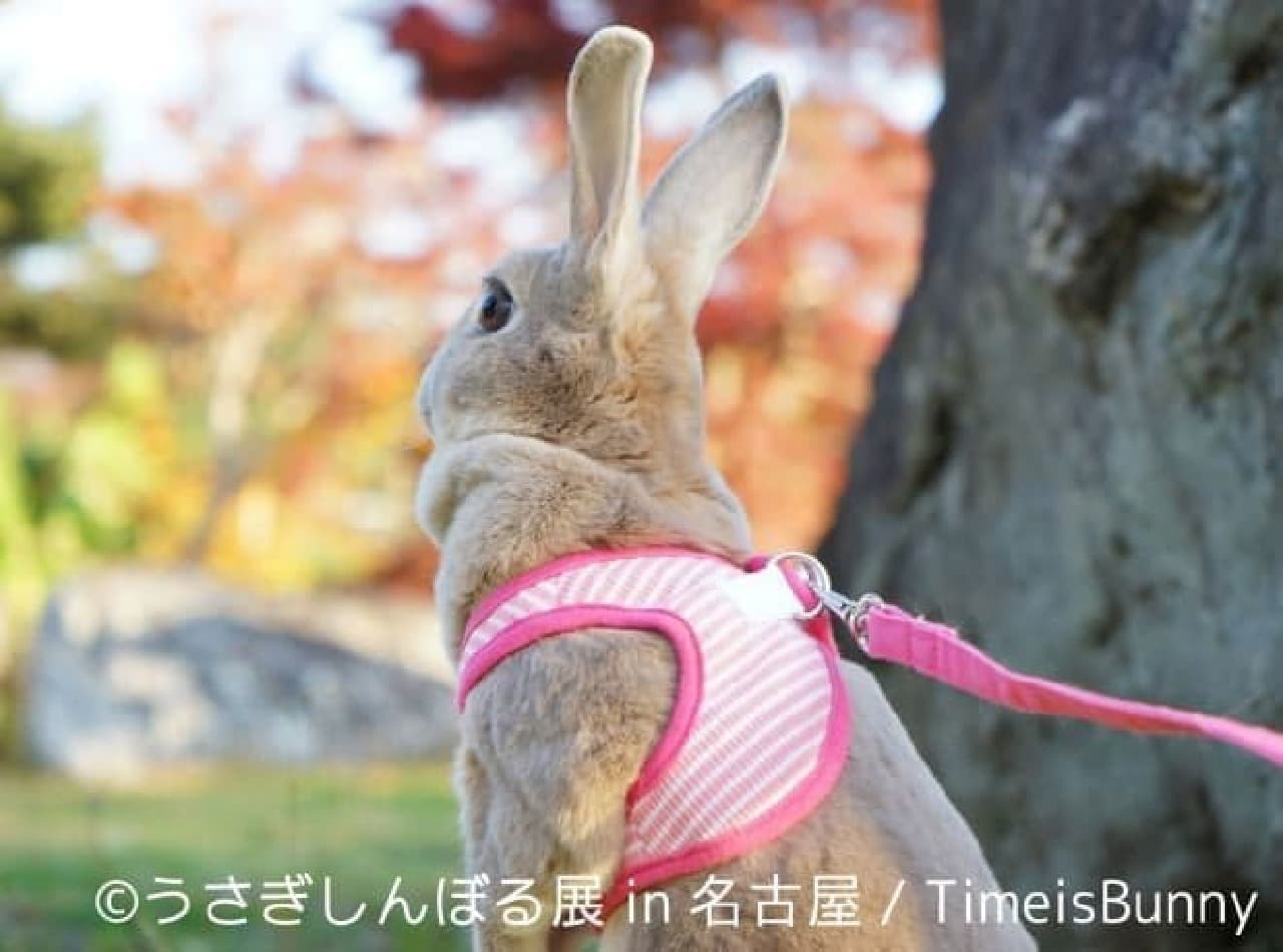 Time is Bunnyさん