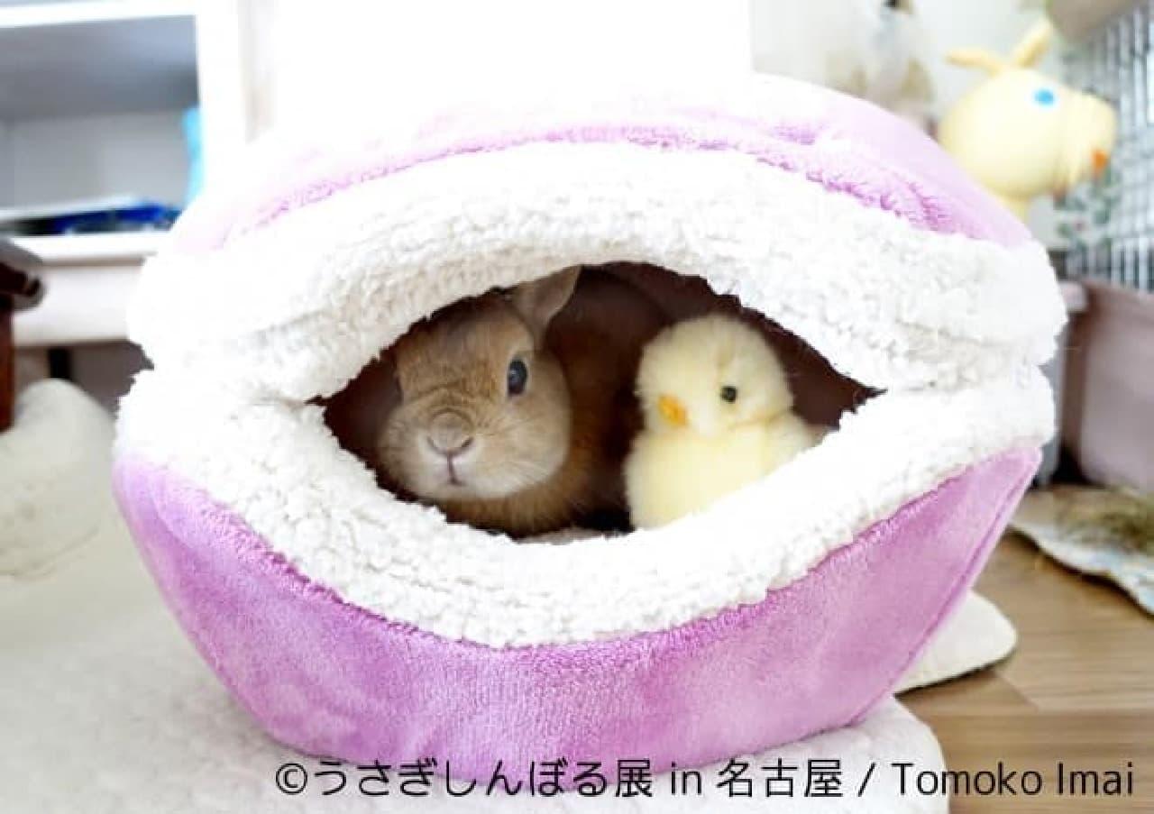 うさぎ界の神と呼ばれるモキュ様の写真で人気のアーチストTomoko Imaiさん