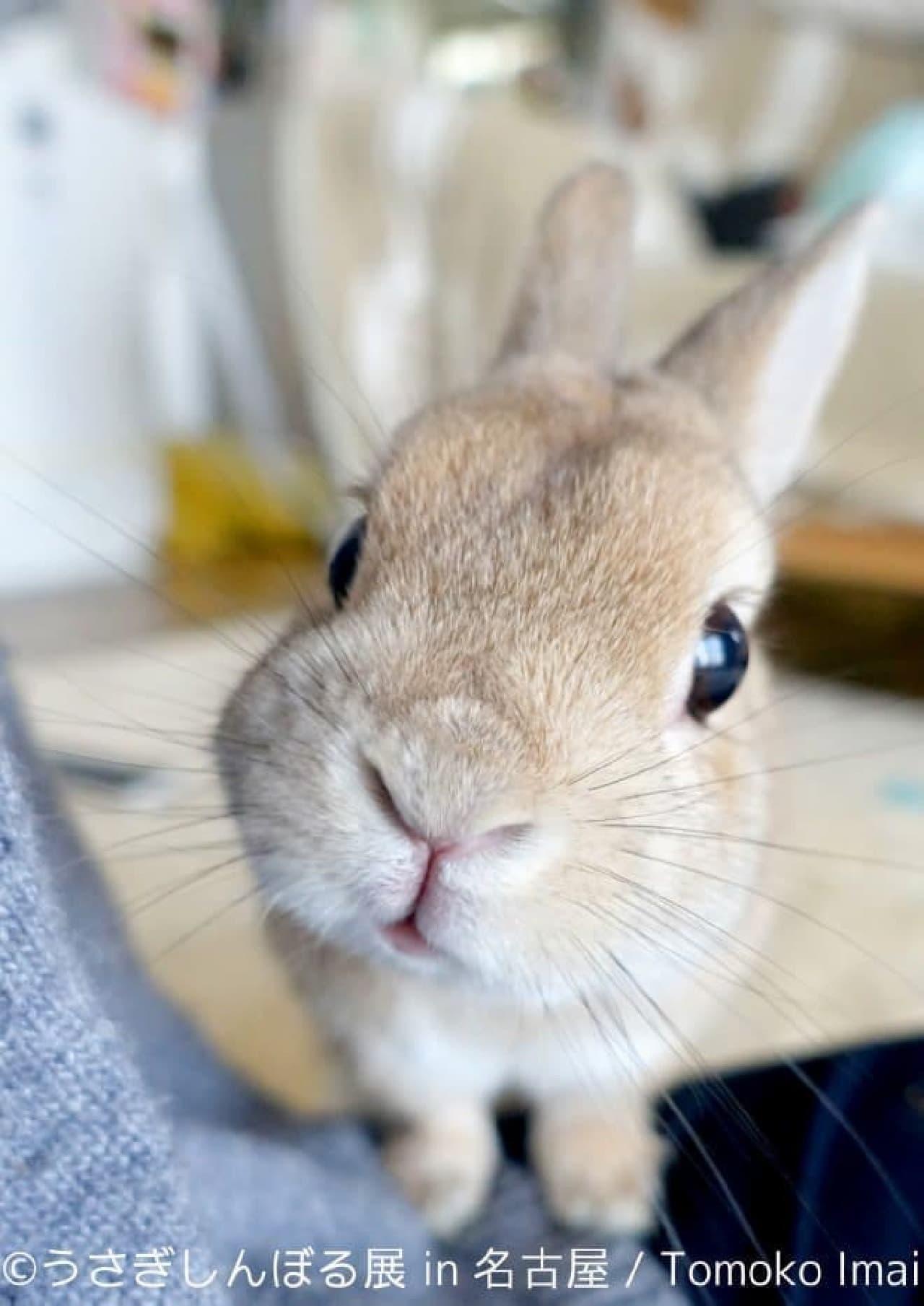 もふもふもきゅもきゅ、秋ウサギ♪―「うさぎしんぼる展 in 名古屋」