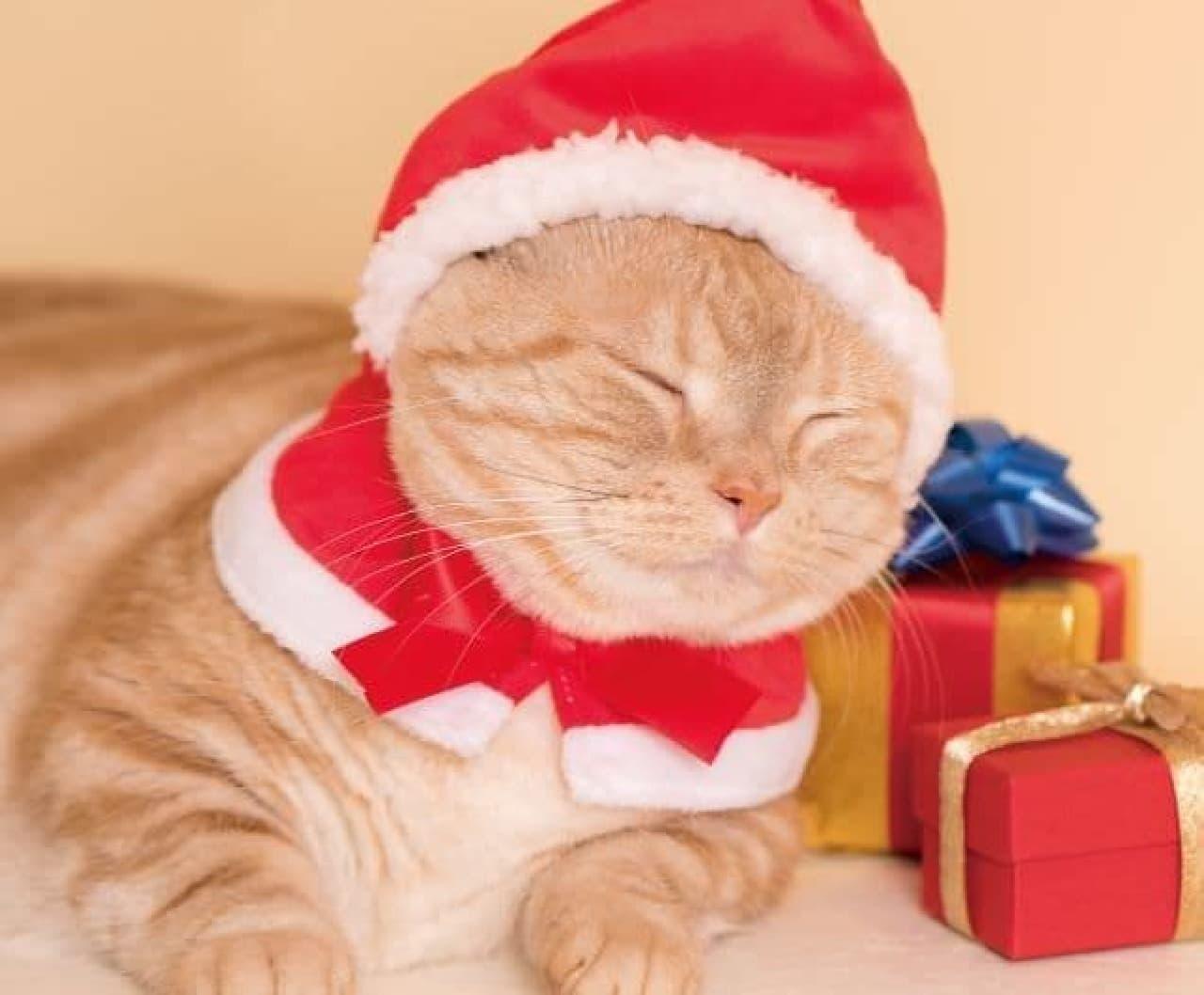 カプセルトイ「かわいい かわいい ねこクリスマス ちゃん」