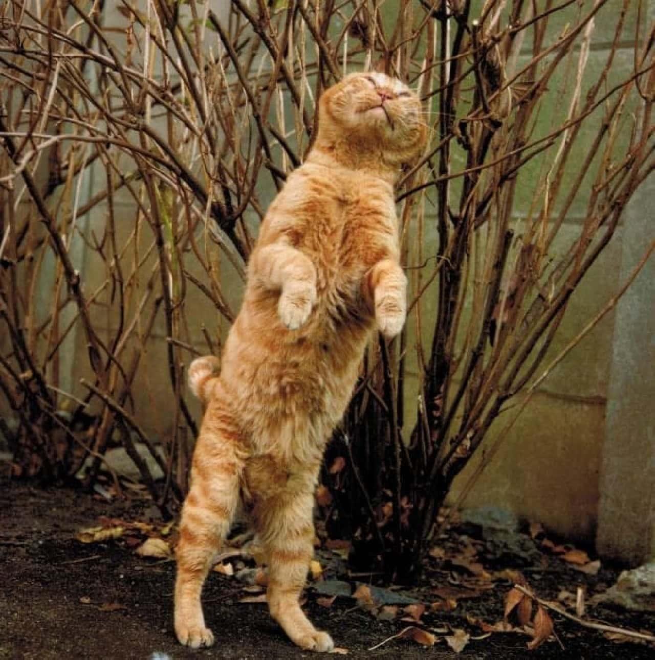 沖昌之さんによるネコ写真展「写真集重版出来記念個展 in KYOTO」