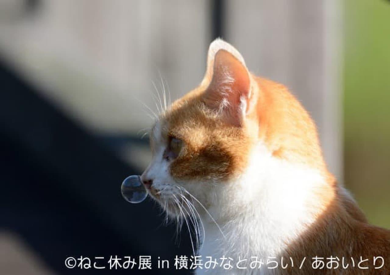 あおいとりさん「ねこ休み展 in 横浜みなとみらい」