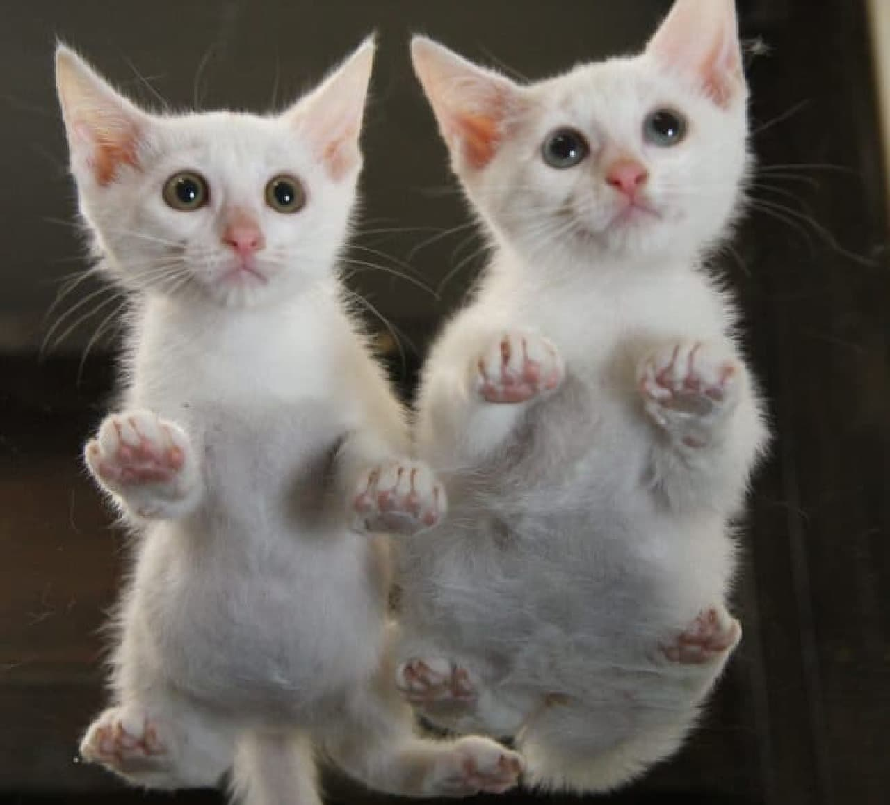 「にゃんたま」の芳澤ルミ子さんによる最新写真集『ネコの裏側』