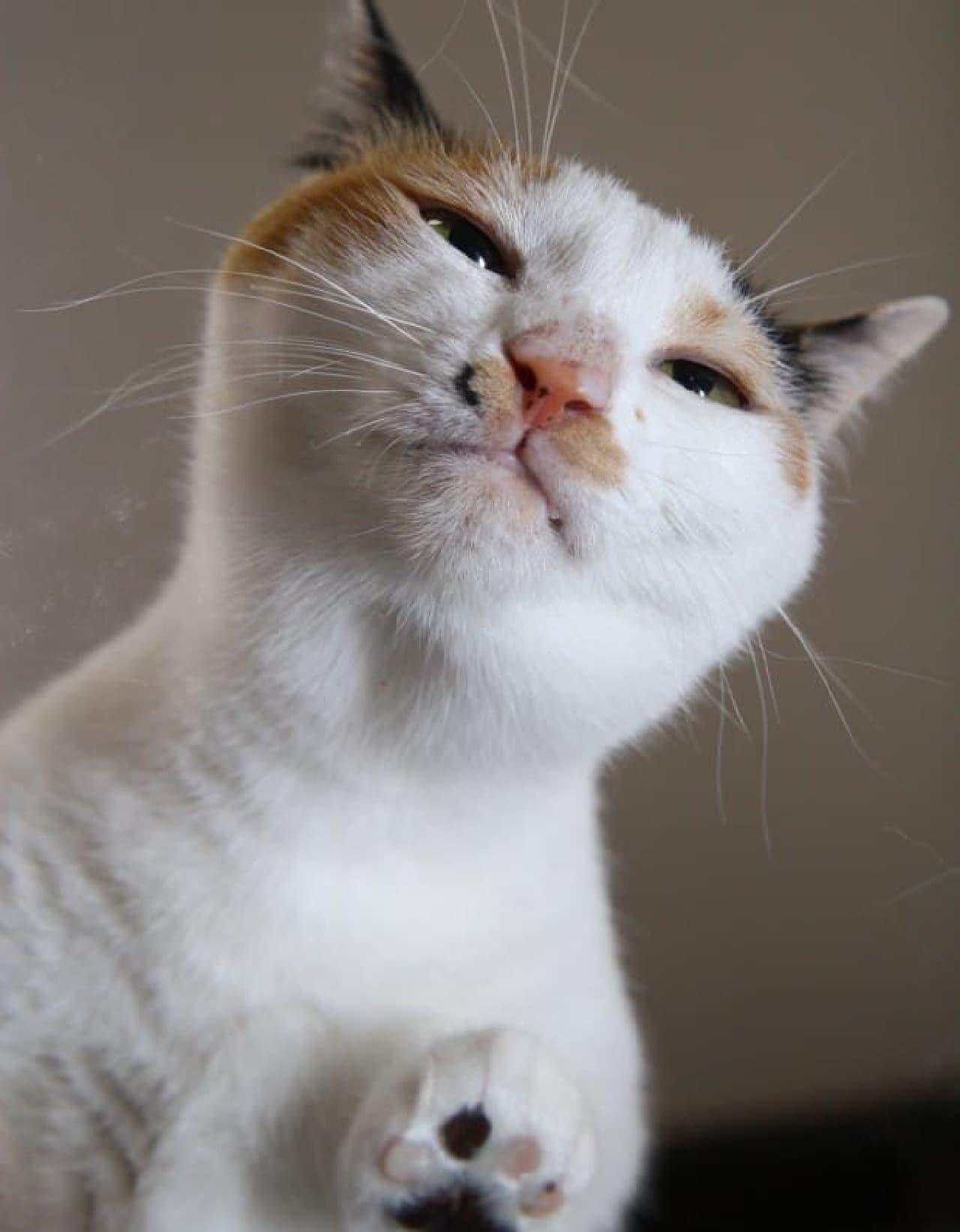 にゃんたま」の芳澤ルミ子さんによる最新写真集『ネコの裏側』