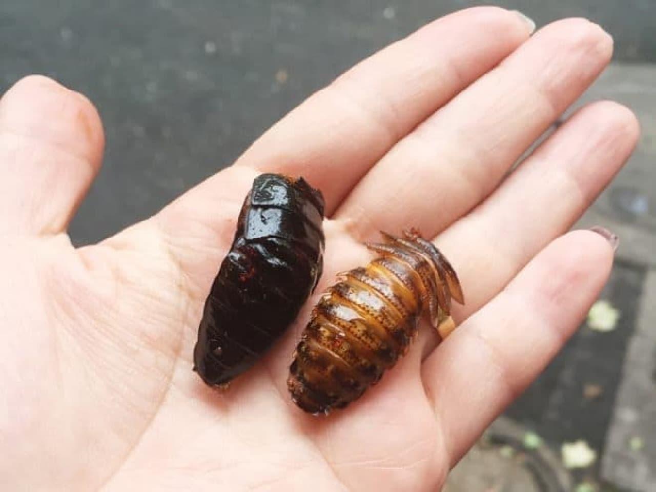 ゴキブリのイメージ