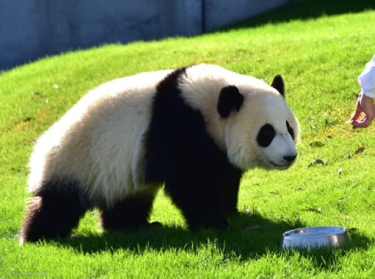 子パンダのイメージ