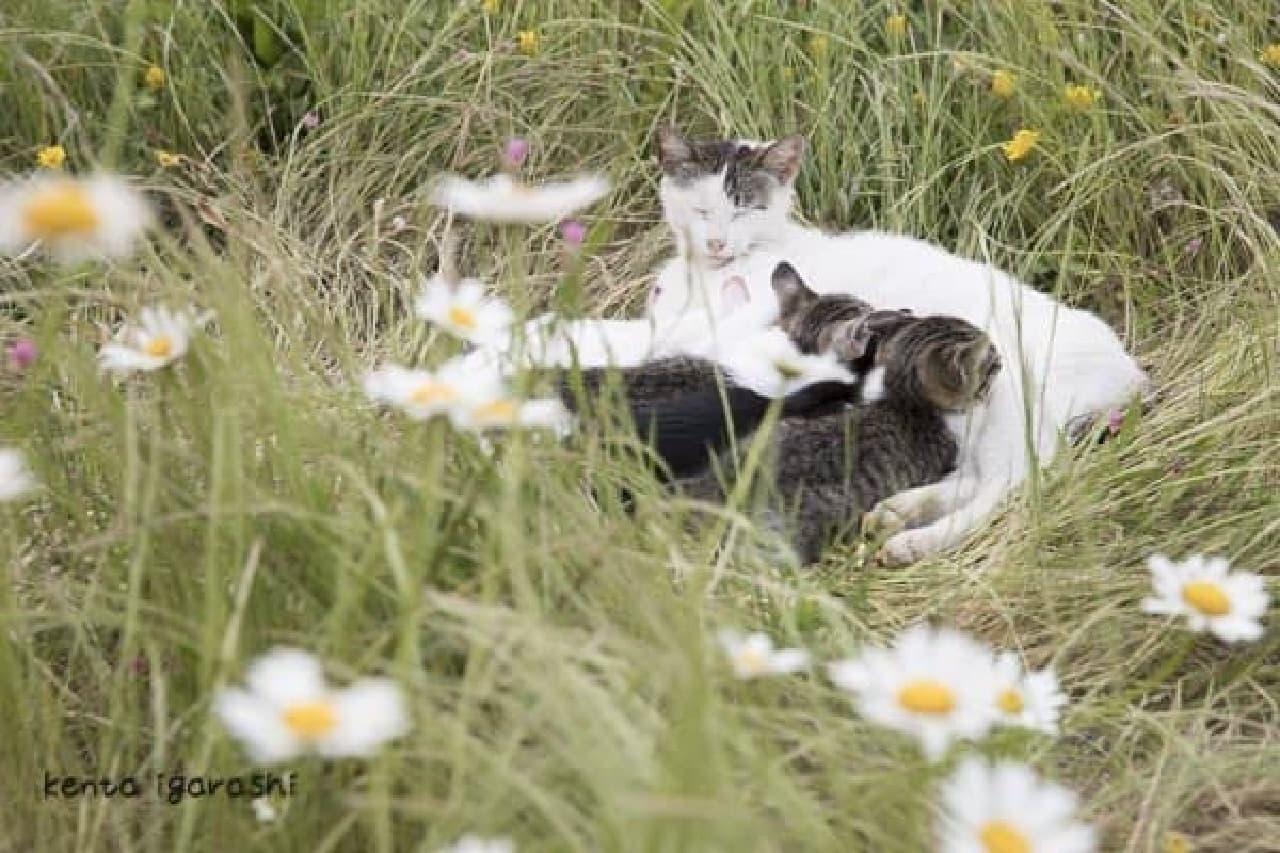 DVD付き写真集「瀬戸内海の猫が教えてくれた、だらりのらりと生きる術。」