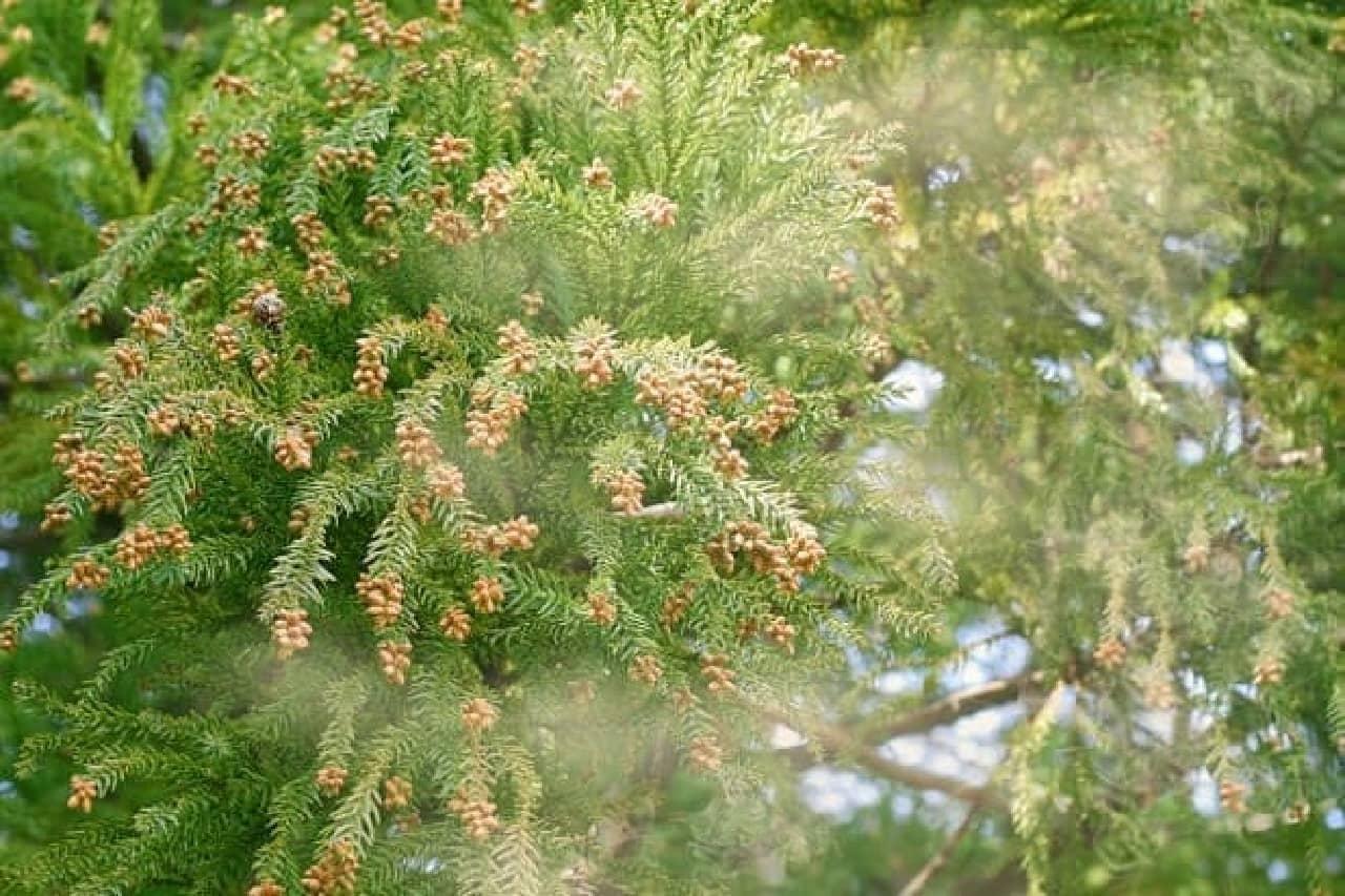 花粉のイメージ画像