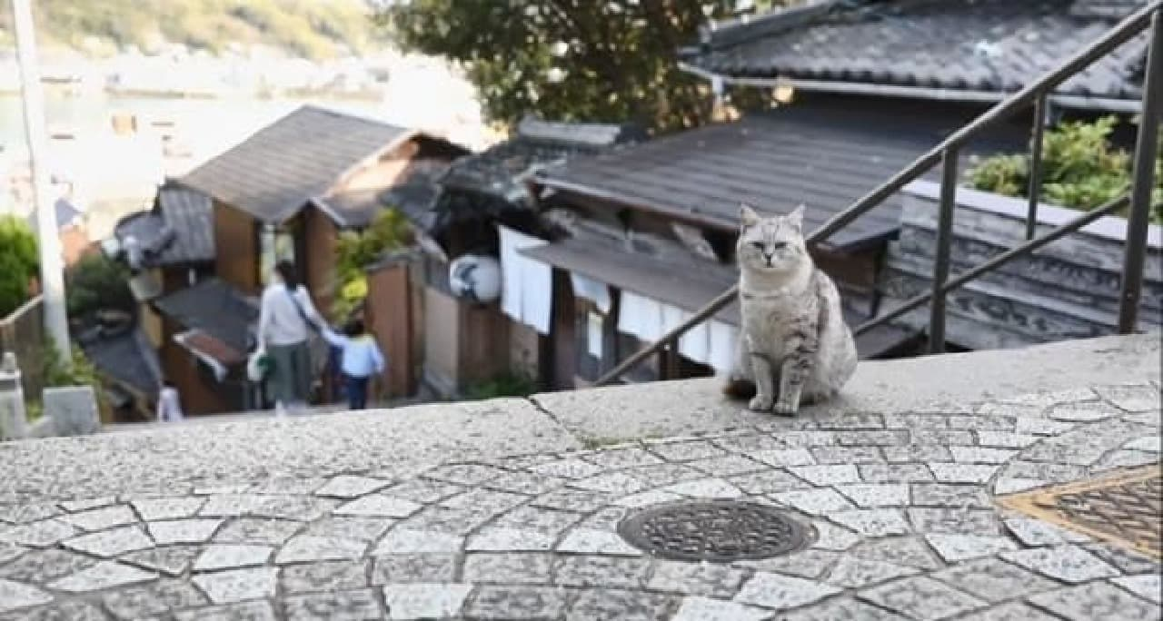 ネコ目線で瀬戸内海の島や街を楽しめる写真集『瀬戸内海の猫が教えてくれた、だらりのらりと生きる術。』