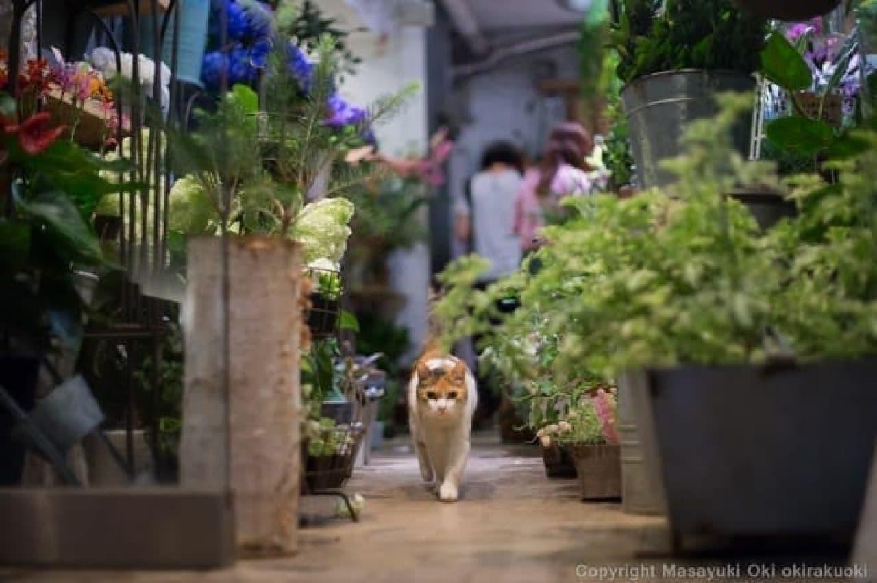 ネコ写真家沖昌之さんのトークショー開催