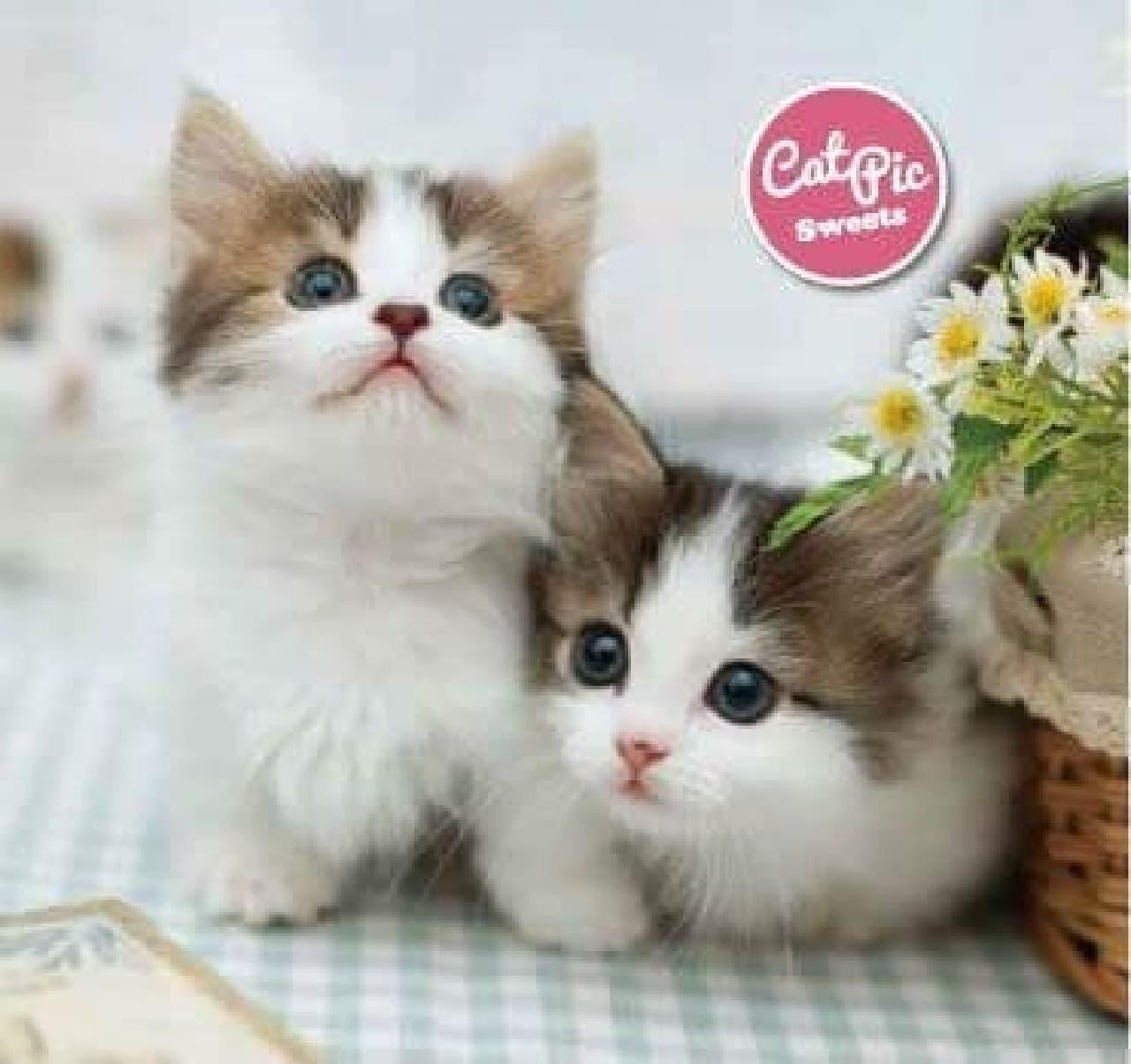『飛び猫』の五十嵐健太さん撮影のネコパッケージ「CAT PICクッキーズ」
