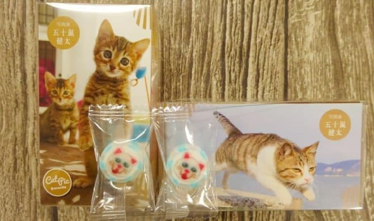 CAT PICキャンディーズ五十嵐健太さん
