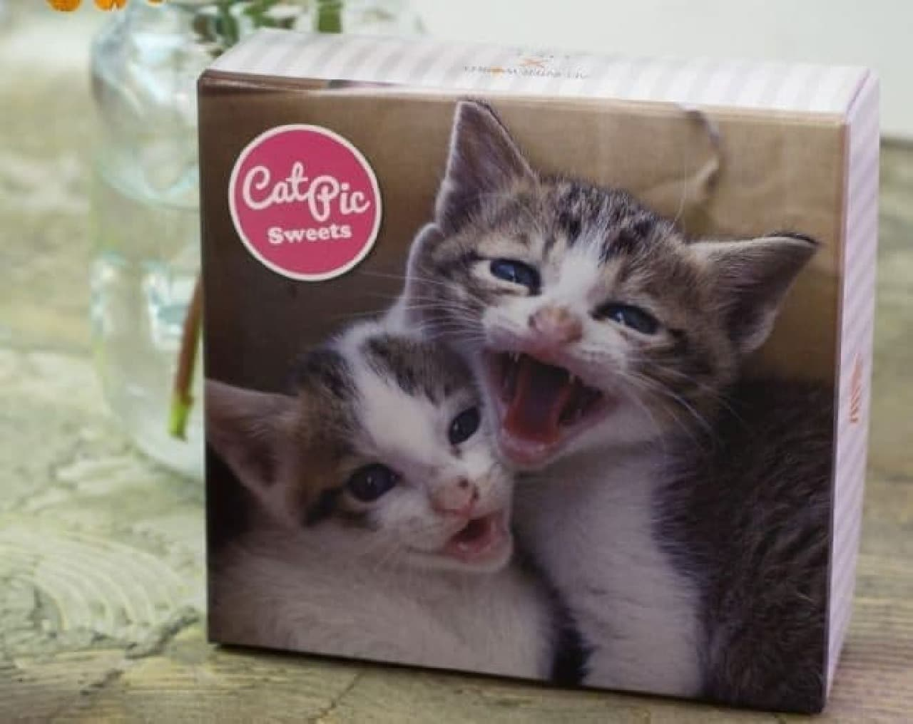 『必死すぎる猫』の沖昌之さん撮影のネコたちがパッケージの「CAT PICクッキーズ」