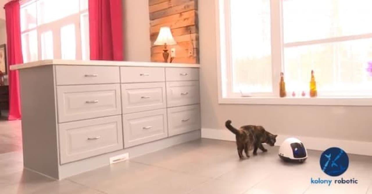 犬とネコのために作られたロボット「MIA」