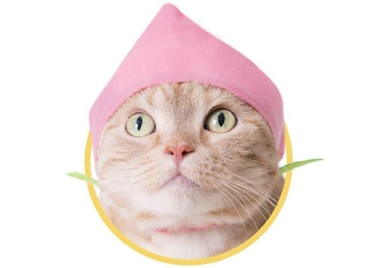 ネコ専用カプセルトイ第20弾「かわいい かわいい ねこのフルーツちゃん2」