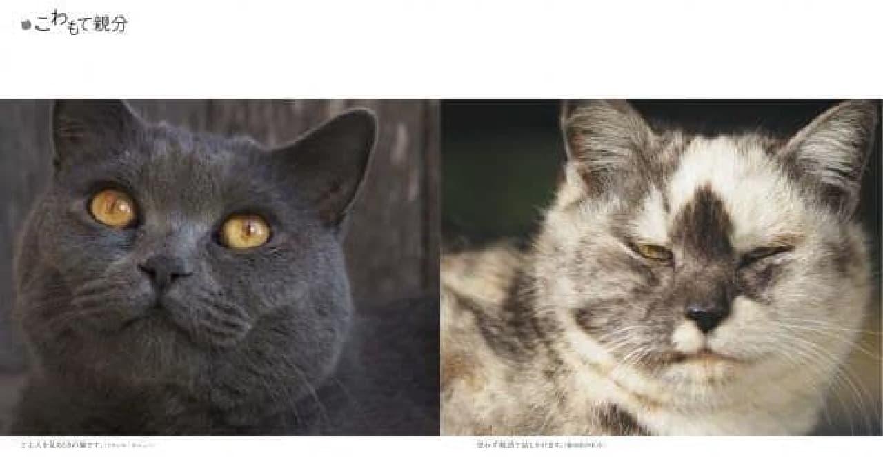 こわもて親分 岩合光昭写真集『ネコおやぶん』