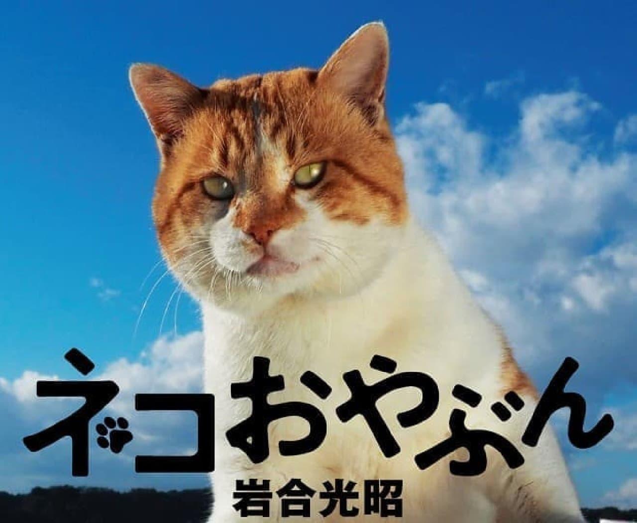 岩合光昭写真集『ネコおやぶん』