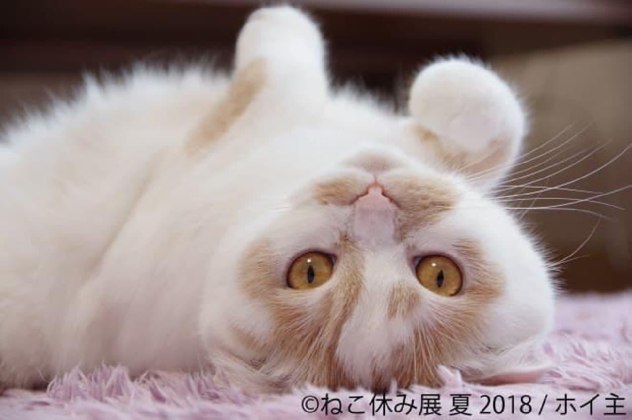 ホイ主さん 3周年に突入した「ねこ休み展 夏 2018」