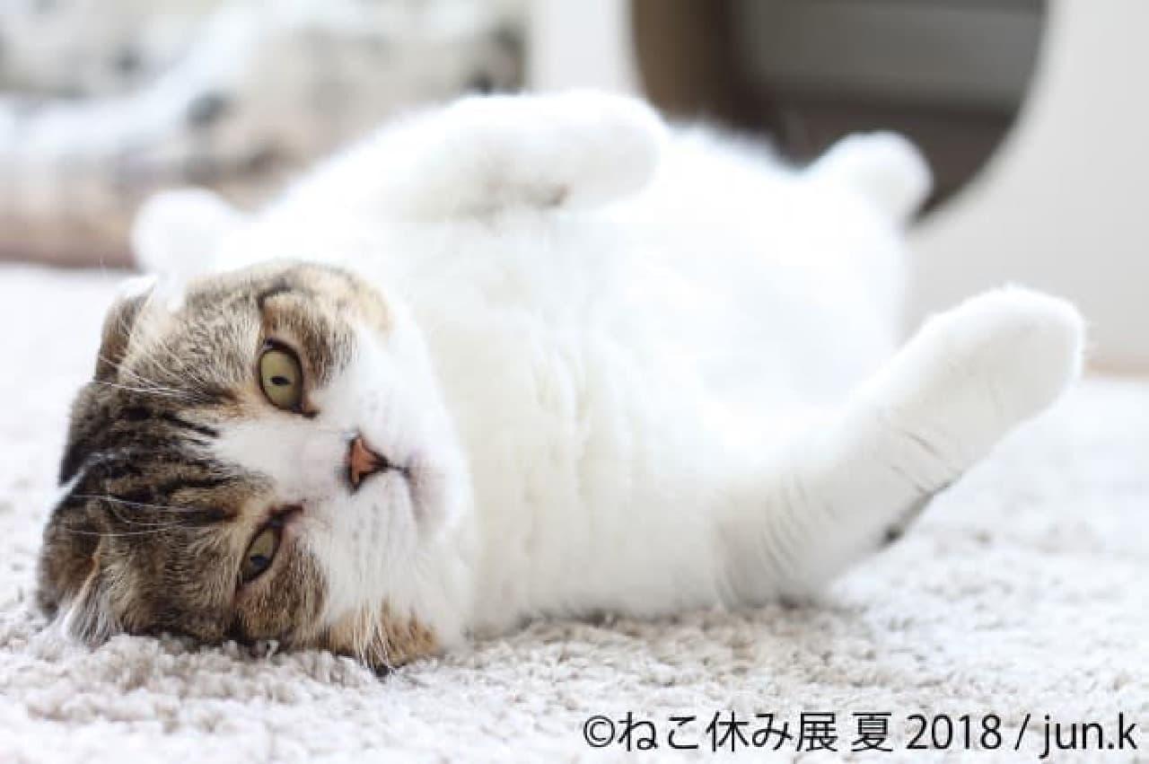 jun.kさん 3周年に突入した「ねこ休み展 夏 2018」