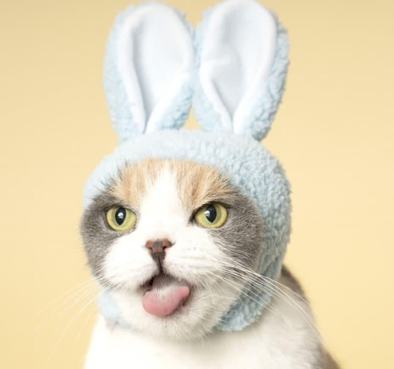 カプセルトイ「ねこのかぶりもの」の写真集、「かわいい かわいい ねこのかぶりもの」