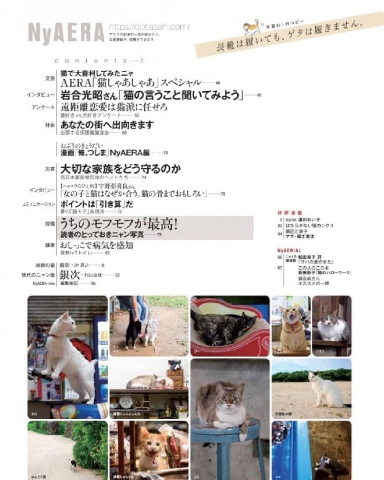 夏も「AERA」がネコまみれ…「NyAERA (ニャエラ) みっけ」の表紙は、沖昌之さん撮影のトルコのネコ